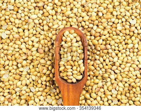 Spice Coriander (coriandrum Sativum) In Wooden Scoop On Coriander Background. Organic Food Concept