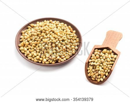 Spice Coriander (coriandrum Sativum) Seeds In Clay Plate And Wooden Scoop Isolated On White Backgrou