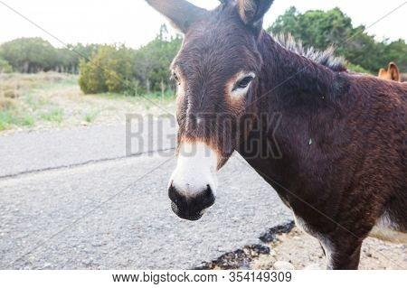 Wild donkey in Northern Cyprus