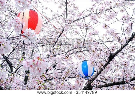 Japanese Traditional Lantern Or Lamp In Japanese Style In Hanami Festival, Enjoy Food Festival Aroun