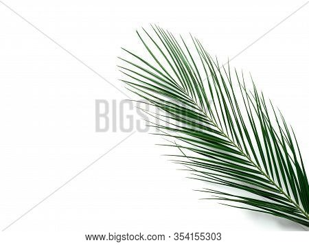 Palm Leaves Isolated On White Background. Tropical Palm Leaves Top View Or Flat Lay. Copy Space For