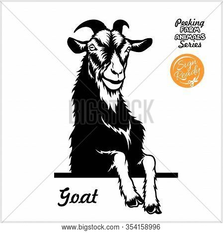 Peeking Goat - Cheerful Goat Peeking Out - Face Head Isolated On White - Vector Stock