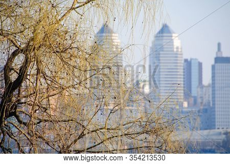 Spring. In The Foreground Willow Branches. Back, Blurred, Plan High-rise Buildings Of The City. Sele