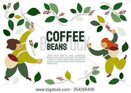 Vector Illustration Of Happy Pickers Are Harvesting Ripe Red Berries Of Coffee From Branches Of Tree