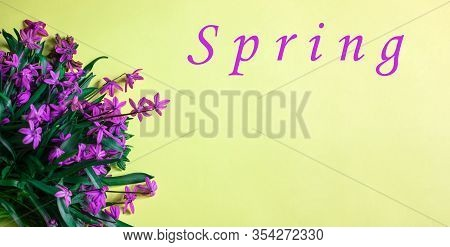 Spring Flower Landscape. Spring Blooming Spring Flowers On A Yellow Background. Colorful Flowers In