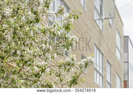Blooming Spring Trees In Front Of A Modern Building With Big Windows.
