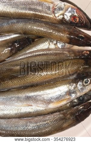 Fresh Smelt.background Of Fresh Smelt Fish.smelt On A White Background.