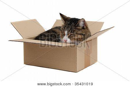 Cute Cat In Removal Box