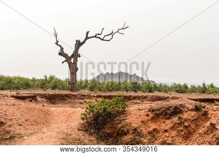 Landscape With Dry Lone Bare Tree In Dry Hilly Semi-arid Area Of Chota Nagpur Plateau Of Jharkhand I