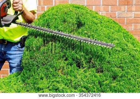 Gardener In Trimming Trees With Telescopic Pole Saw With Pruner In Park