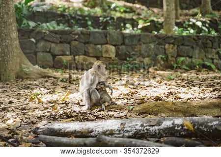 Portrait Of A Mother Monkey With A Cute Baby Monkey. The Baby Hugs His Mother. Mama Monkey Takes Car