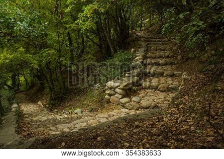 Fairy Tale Fantasy Forest Scenery Landscape Beautiful Atmospheric Green Natural Environment With Old