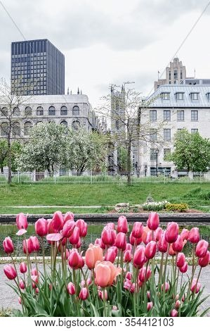 Tulips Growing In The Spring Park. Old Port Of Montreal (quebec, Canada).