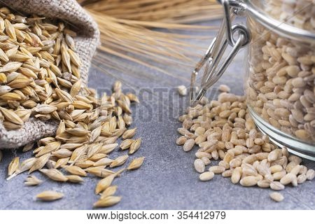 Grains Of Barley And Pearl Barley On A Gray Background.