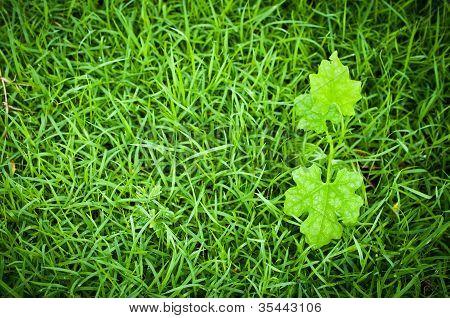 Macro Of Green Leaf, Natural Fresh