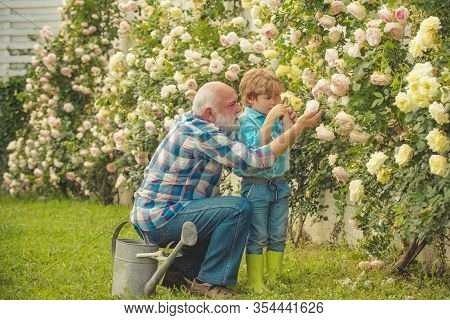 Planting Flowers. Grandfather And Grandson In Beautiful Garden. Senior Man With Grandson Gardening I