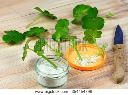Cuttings Of Geranium And Stimulator. The Breeding Of Plants With Stimulator Powder. Knife For Cuttin