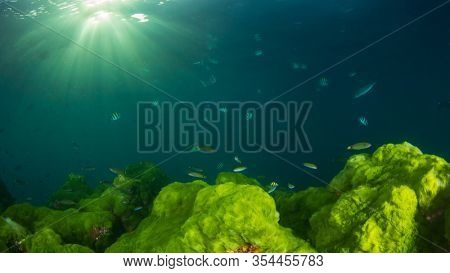 Blue ocean, sunlight and green algae on reef