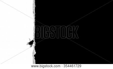 Black Fly On The Border Of Black And White. The Concept Reflects Being On The Border: Good And Evil,