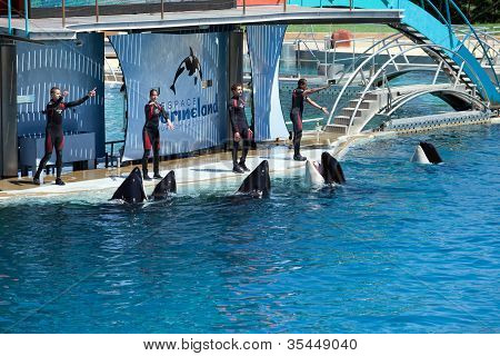 Whale Trainers