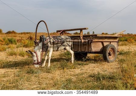 Donkey Harnessed To An Iron Cart Stands In A Meadow. Donkey Eats Dry Grass