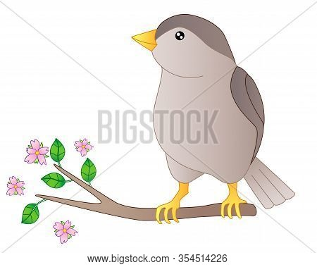 Little Beautiful Bird - Vector Full Color Picture. Sparrow Is Sitting On A Flowering Branch. Spring
