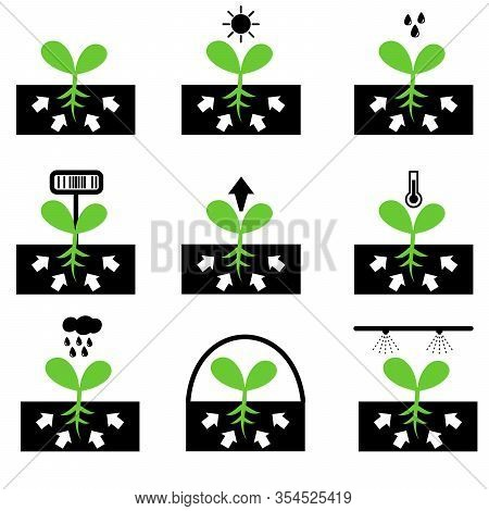Plant And Sprout Icon Set. Growing Icons Flat Design Vector.