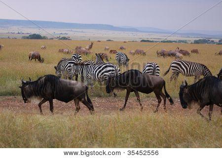 animals in Massai Mara