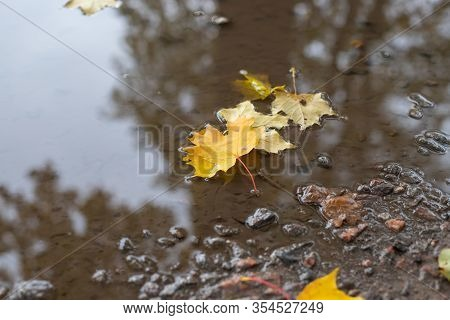 Autumn Leaves On The Puddle.yellow Maple Leaves Lying In The Still Water Of A Puddle.fall Season Con