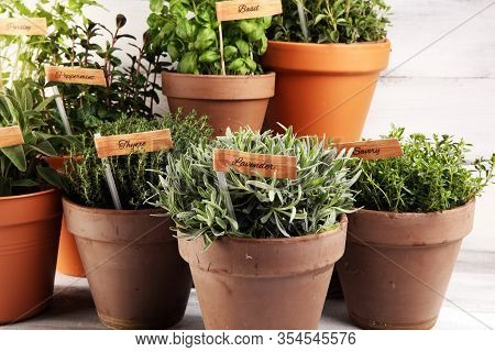 Homegrown And Aromatic Herbs In Old Clay Pots. Set Of Culinary Herbs. Green Growing Sage, Oregano, T