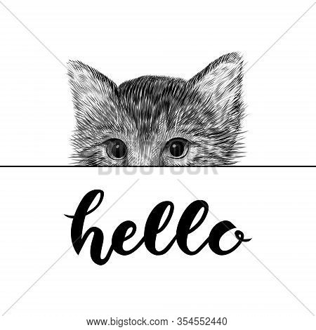 Little Cat, Kitten Black And White Vector Illustration. Hand Drawn Sketch Drawing. Pet Portrait, Pee