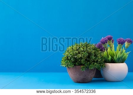 Flower Pots On Blue Background With Copy Space.