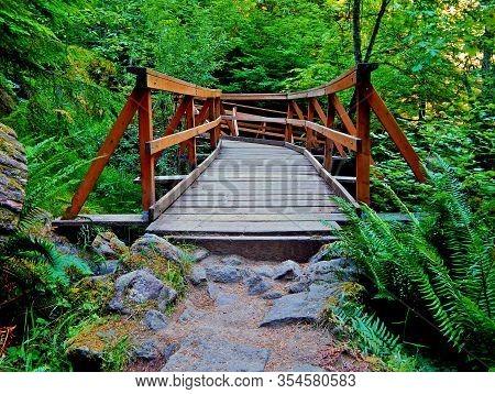 Forest Footbridge - Bridge Over Watson Creek By Watson Falls - North Umpqua River Area - Or