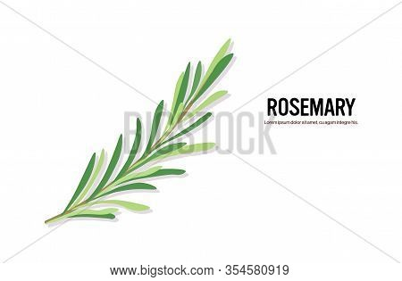 Realistic Rosemary Twig Tasty Fresh Herb Green Leaves Healthy Food Concept Horizontal Copy Space Vec