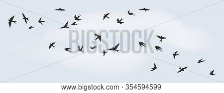 Flying Birds Silhouette. Flock Of Black Marine Birds, Doves, Seagulls Or Swallows For Decoration, Is