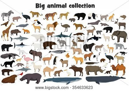 Big Animal Collection. Set Of Wild Forest, Arctic And Antarctic, Jungle, Mountain, African, Australi