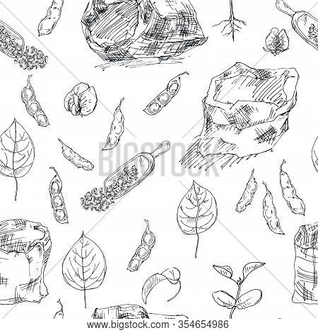 Seamless Pattern With Ink Hand Drawn Legume Crops Isolated On White. Vector Black And White Illustra