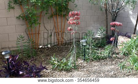 Arizona Desert Style Xeriscaping Decorated With Kalanchoe Daigremontiana Succulents Also Known As Mo
