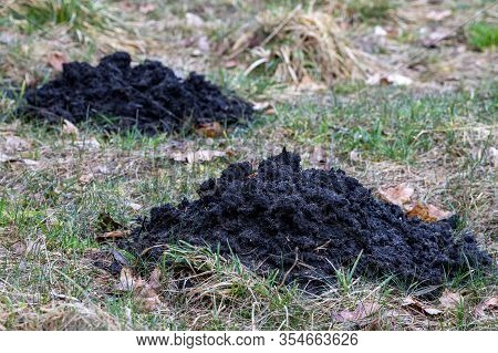 Molehill In The Meadow. Black Soil Dug By A Mole.