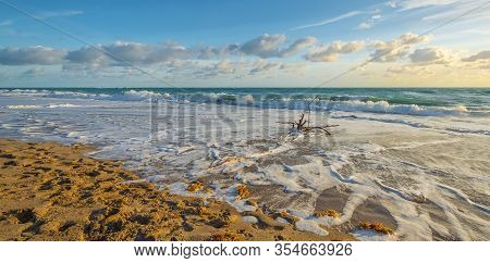 Wide View Of An Uprooted Tree Washed Up On The Juno Beach Surf In Florida As The Morning Sunlight Gl