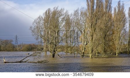 Submerged Trees In Alney Island Floods, Gloucester, Gloucestershire, Uk