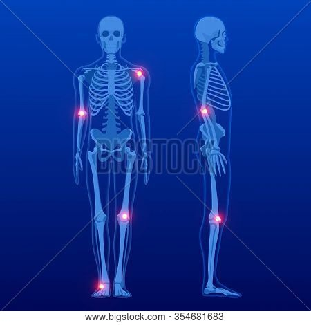 Human Skeleton In Front And Profile. Human Skeleton Anatomy X-ray.
