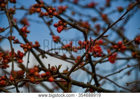 Branches And Red Florets With Blurred Sky In Background