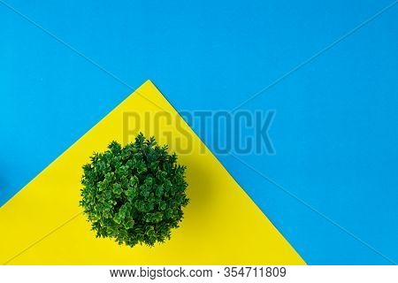 Flat Lay Tree Pot On Yellow Background.