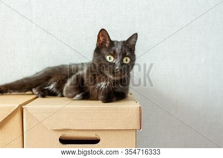 Elegant Black Cat With Yelow Eyes Lies On Cardboard Box