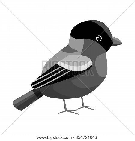 Isolated Object Of Bullfinch And Bird Icon. Set Of Bullfinch And Robin Stock Vector Illustration.