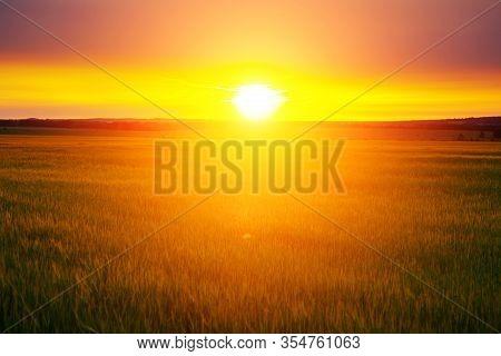 Wheat Field At Sunset. Beautiful Sunset Nature Background.