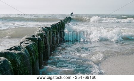 Beautiful Seascape: Shag Bird On Breakwater Bathing In Sea Waves Near Coastline