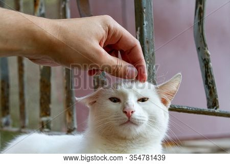 A Man Stroking A Homeless White Cat On The Street Of The Old City. The Concept Of Taming, Pity, Cari