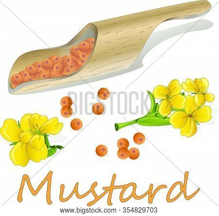 Mustardcolor003